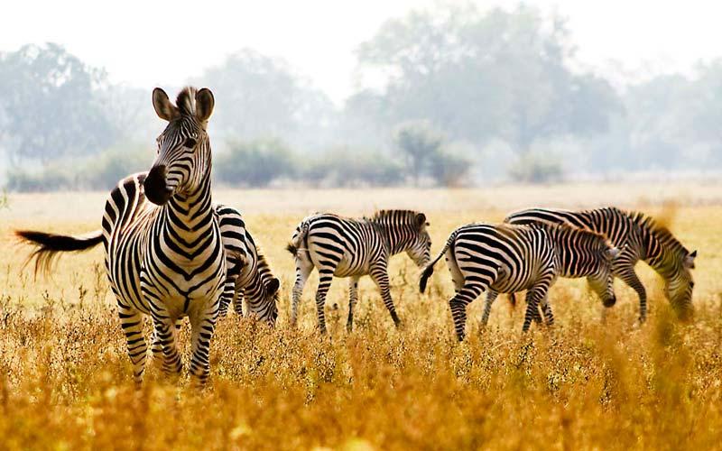 Vizesiz-Afrika-Ulkeleri-Zambia